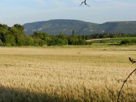 Agriculture et Paysages_10