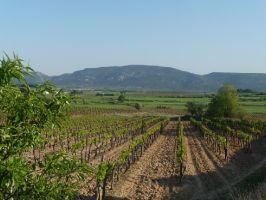 Agriculture et Paysages_34